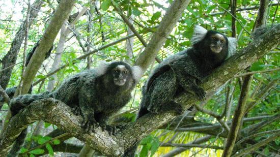O que são micos na bolsa de valores? Micos na BM&FBOVESPA